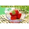 优质草莓苗草莓苗价格草莓苗移栽技术