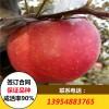 苹果树苗 2公分粗苹果树苗批发价格