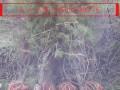 山西油松苗种植基地
