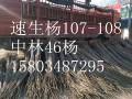速生杨鸿运国际官网价格
