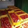 四季草莓苗 四季草莓苗注意