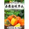 兰溪大红柿子苗  品质纯正  成活率高