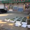 哪里有章姬草莓苗、章姬草莓苗多少钱一棵