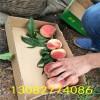 冬桃树苗多少钱一棵、出售冬桃树苗、冬桃树苗出售价格