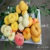 桃树苗价格、哪里有好品种桃苗、哪里有黄桃树苗价格