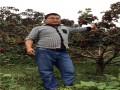 山东山楂苗品种