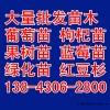 批发蓝莓苗,蓝莓苗多少钱一棵,蓝莓苗价格