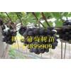 夏黑葡萄苗、夏黑葡萄树苗出售、夏黑葡萄树苗价格多少钱