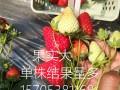 牛奶草莓苗哪里有