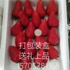 红颜草莓苗批发价格 红颜草莓苗供应 红颜草莓苗多少钱