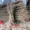 哪里有石榴树、出售石榴树苗、石榴树多少钱、哪里有庭院石榴树