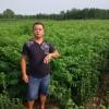 山東1公分香椿苗價格,1米高香椿苗多少錢