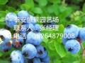 三年蓝莓苗多少钱