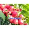 中华钙果苗--北方钙果苗--山西优种钙果苗-北方钙果苗