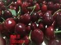 黑珍珠樱桃苗果实