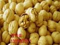 香玲核桃树苗价格、核桃树苗新品种