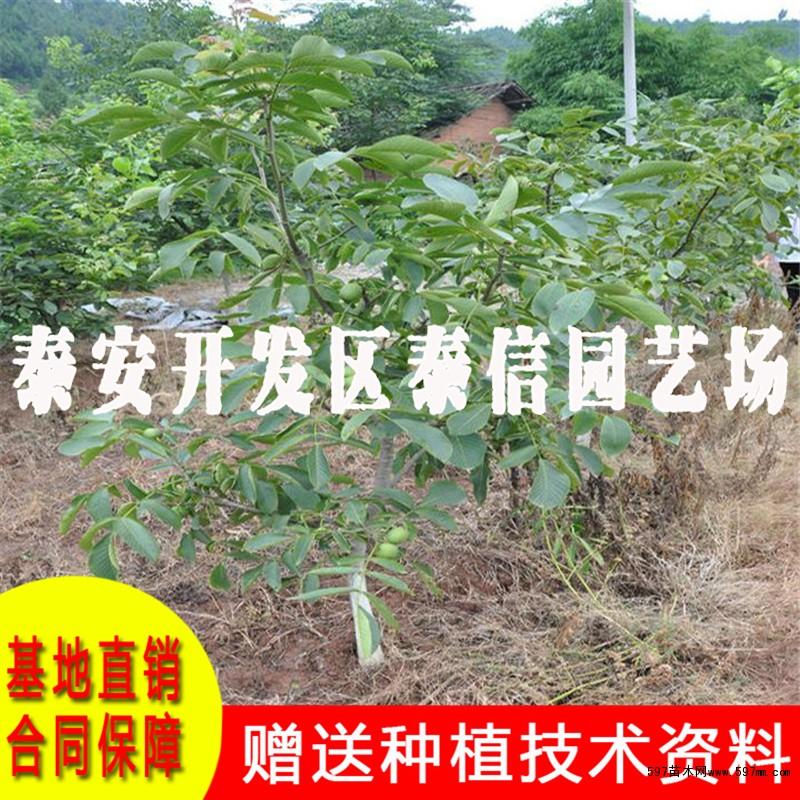 核桃树夏季整形修剪技术是核桃栽培管理中的一项重要技术措施,接下来