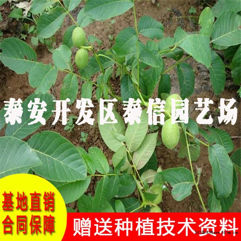 吸收树体养份,致使树势衰弱,甚至枝条枯死,导致果品质量差,空壳瘪壳多