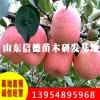 太极红苹果苗价格 太极红苹果苗基地