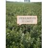 出售杜梨苗及种子八棱海棠苗及种子桃苗桃核苹果苗黄冠梨苗