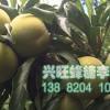 蜂糖李子苗,蜂糖李苗价格,贵州蜂糖李子树苗基地