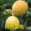 金秋王2号桃树苗几年结果