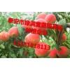1年桃树苗大量供应