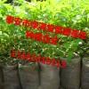 花椒苗新品种这里有