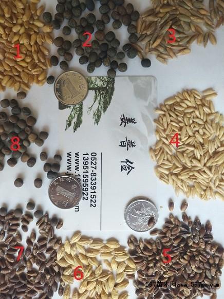 哪里有交播型黑麦草种子进口黑麦草种子饲料型黑麦草种子包邮图片1