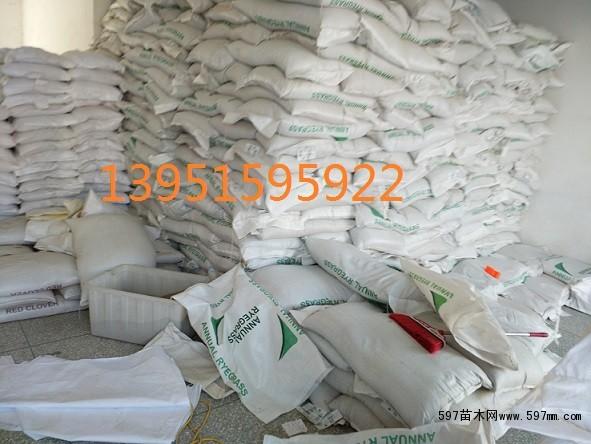 哪里有交播型黑麦草种子进口黑麦草种子饲料型黑麦草种子包邮图片2