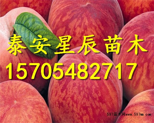 桃树苗新品种哪里出售,去哪里买桃树苗,桃树苗价格图片3