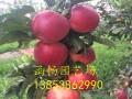 鲁丽苹果苗多少钱一棵