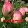 红肉苹果价格 红色之爱价格 山东红肉苹果苗价格