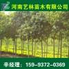 陕西哪里卖苹果树苗苗圃_6-7-8公分苹果树苗树苗供应