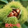 二公分板栗苗几年结果 2公分板栗树苗什么时候种