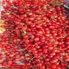苗圃直销樱桃种子价格 哪里有卖山樱种子多少钱一斤