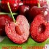 山东樱桃种子价格 哪里樱桃种子便宜多少钱一斤