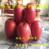 烟富6号苹果树苗、烟富6号苹果树苗价格多少