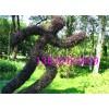 小叶女贞造型编织基地.植物造型编织.植物编织的人物运动造型