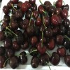 1公分2公分3公分樱桃树苗基地、黑珍珠樱桃树苗价格
