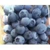 蓝莓鲜果,蓝莓果