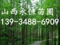 10公分核桃树价格