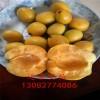 哪里卖1公分杏树,1公分珍珠油杏树苗,哪里有便宜杏树苗