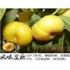 目前好品种 中油蟠桃苗产品细化分类