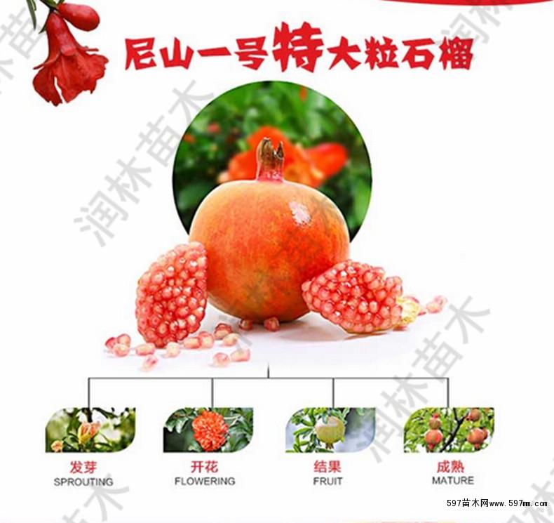 本场果树品种介绍