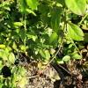 当年结果蓝丰蓝莓苗什么价格 二年三年蓝丰蓝莓苗多少钱一棵