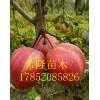 今年早酥红梨的价格  泰安哪有早酥红梨