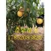 山东哪里有卖黄金蜜桃4号的   黄金蜜桃多少钱一棵