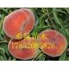 中蟠11号桃树苗哪里有卖的  中蟠11号新品种