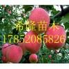 河北哪里有红肉苹果苗的  红肉苹果的种植方法